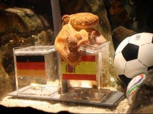 107366668-tintenfisch-paul-sieg-spaniens-wm-halbfinale-voraus.jpg