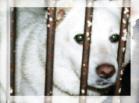 dog_shiro.jpg