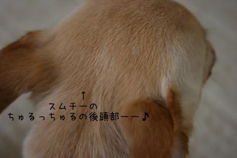 2009_09030040-001.jpg
