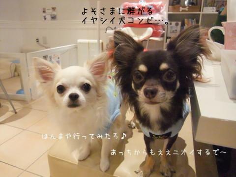 2009_09120036-001.jpg