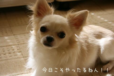 IMG_2004-001.jpg