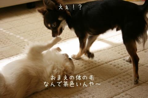 IMG_2010-001.jpg