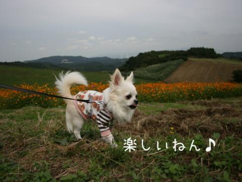 IMG_4076-001.jpg