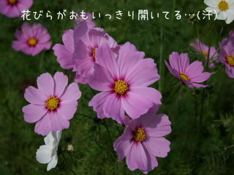 IMG_4092.jpg