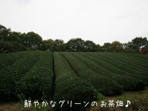IMG_4405-001.jpg