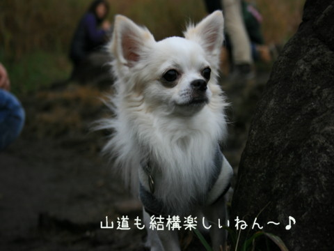 IMG_4571.jpg
