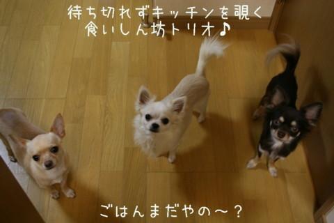 IMG_5879-001.jpg