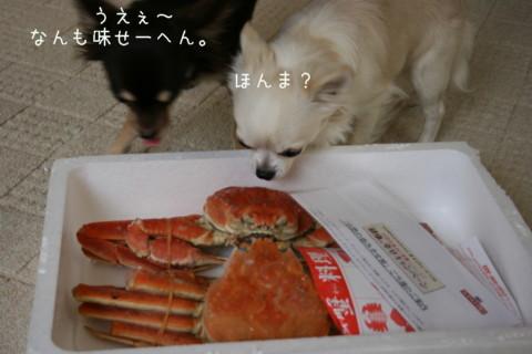 IMG_7578-001.jpg