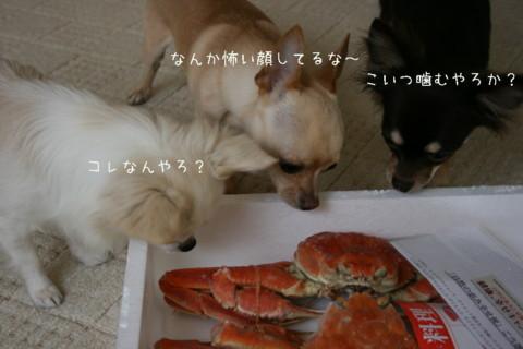 IMG_7585-001.jpg