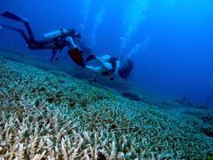 珊瑚が生きてます
