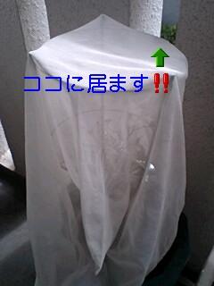20090716095018.jpg