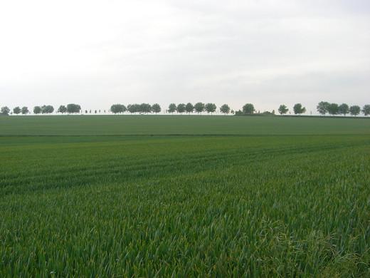 Auvers-sur-Oise1