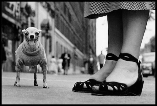 Elliott_Erwitt_Dog_002.jpg