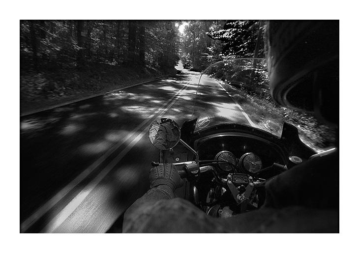forest-blog.jpg