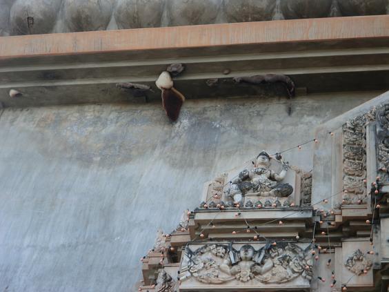 1 12124凱旋門の蜂の巣とツバメの巣 (4)