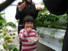 2009・4・3イチゴ狩り芹奈
