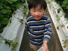 2009・4・3イチゴ狩り丈竜②