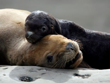 two_seals_together_181108_2.jpg