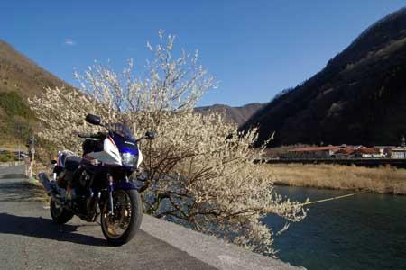 成羽川と梅