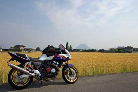 麦畑と讃岐富士