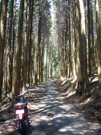 七越峠への林道