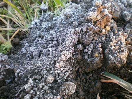 土が… カチカチだよ…