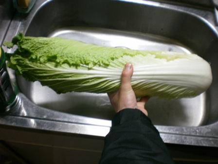 なが~い白菜!