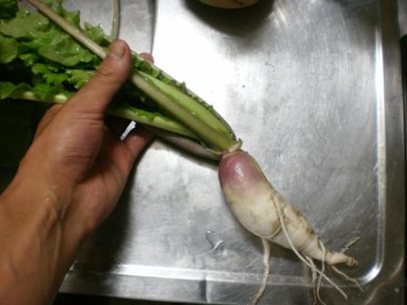 日野菜か?なんだろ?
