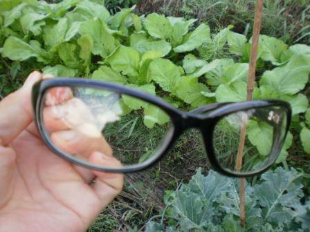 魔法のメガネ?