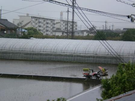 タプタプ田んぼ