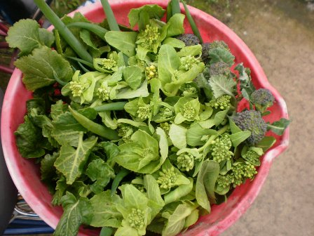 バケツ野菜