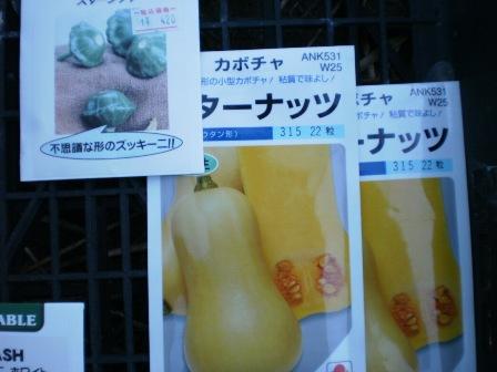 大本命 バターナッツ