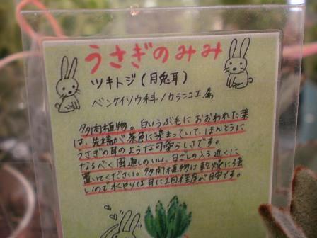 ウサギさんのみみ