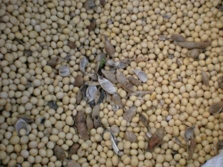 大豆いっぱい