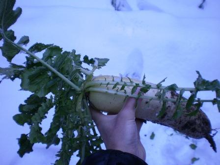 雪の下から掘り出したよ
