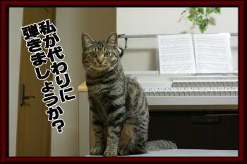 弾きましょうか?