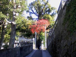 大音寺付近の紅葉