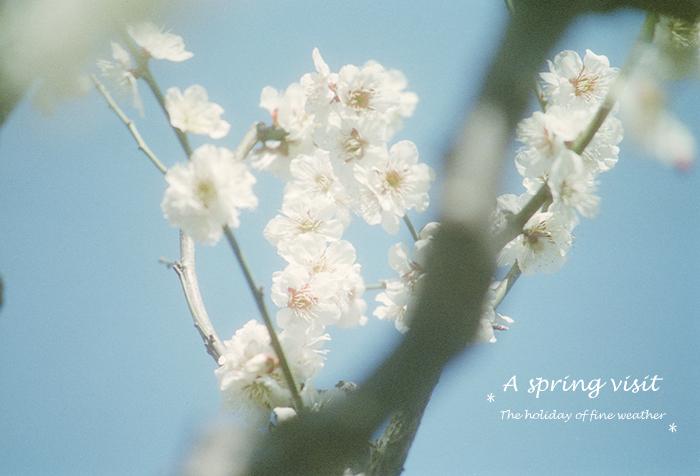 A spring visit 3