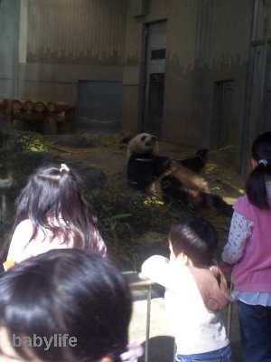 あっきー、パンダ見えた!