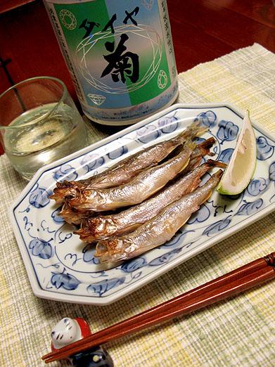 00sishamo_08_11_21.JPG