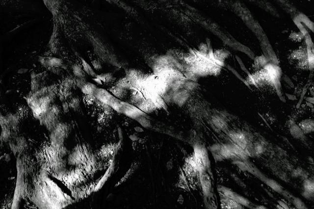 20060305_03.jpg