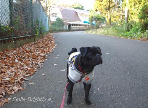 081221今朝のお散歩