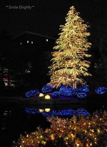081224クリスマスツリー
