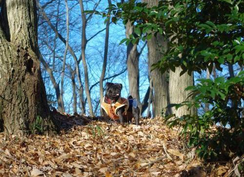 081228落ち葉の遊歩道