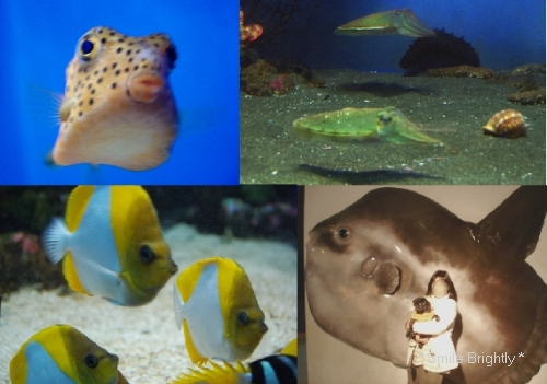"""090202水族館""""魚の国"""""""