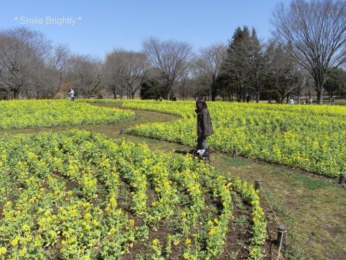 090315菜の花畑♪