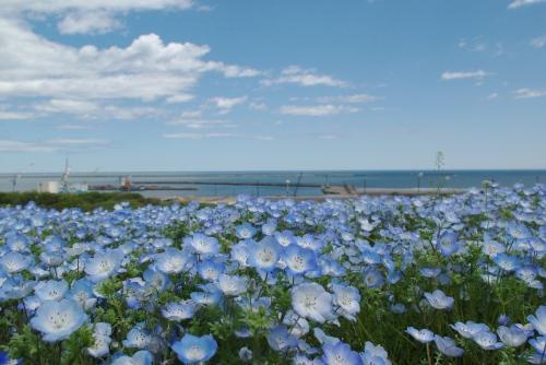090427海♪