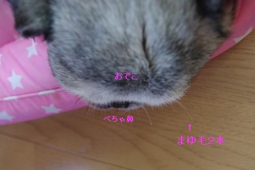 090619眉毛