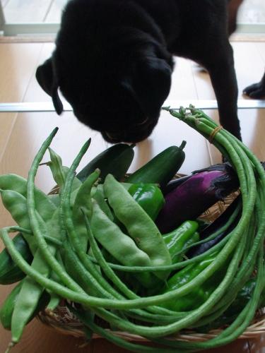 090721お野菜いっぱいありがとう♪