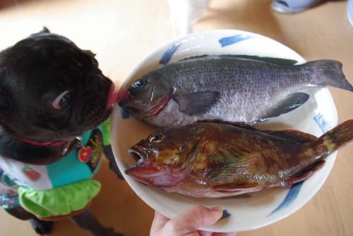 090927お魚
